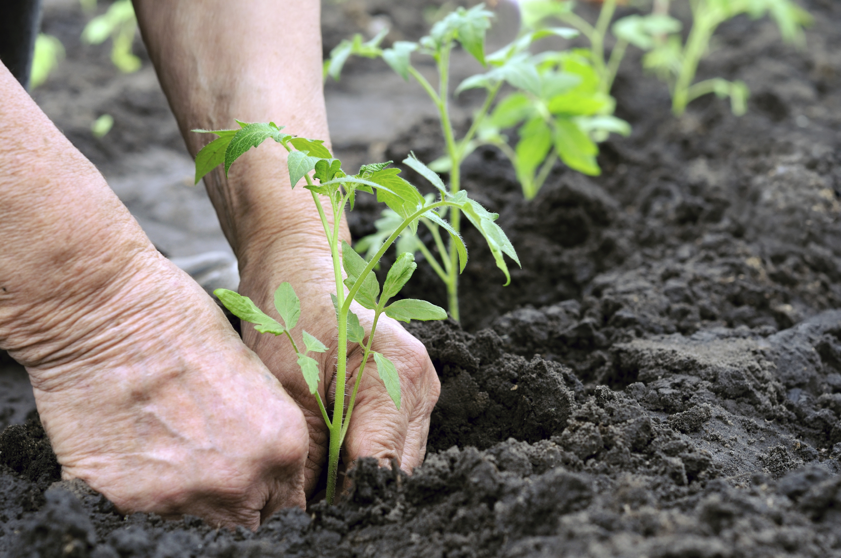 Exceptionnel Tips For Taking The Pain Out Of Gardening