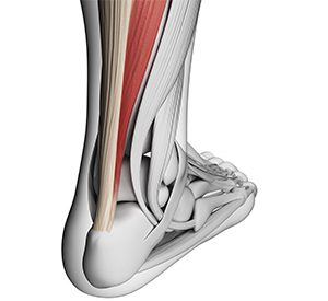take control of your tendons