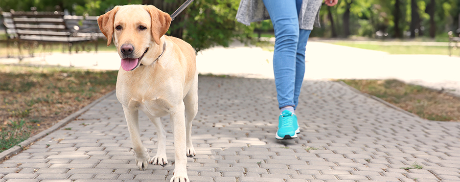 9 Ways to Prevent Injury While Walking the Dog
